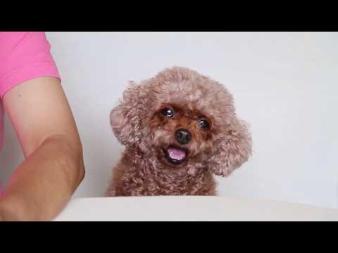 Ann姐分享養狗心得 第一集:大狗迷你狗不易養
