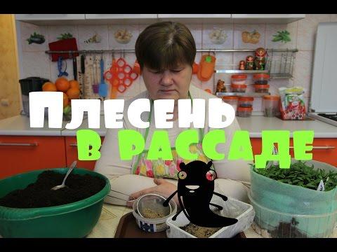 Плесень на рассаде. Решаем проблему.(03.03.2016 г.)
