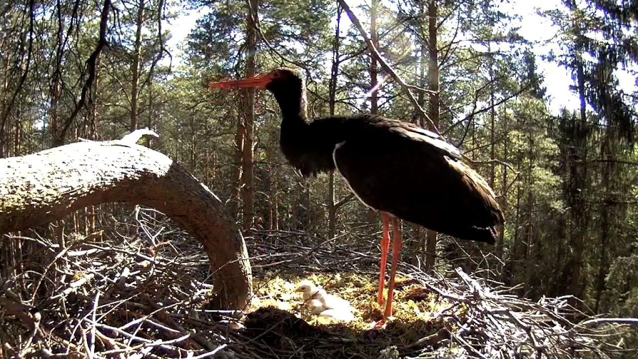 257a34e5a89 Kurekaamera uudised | Looduskalender.ee