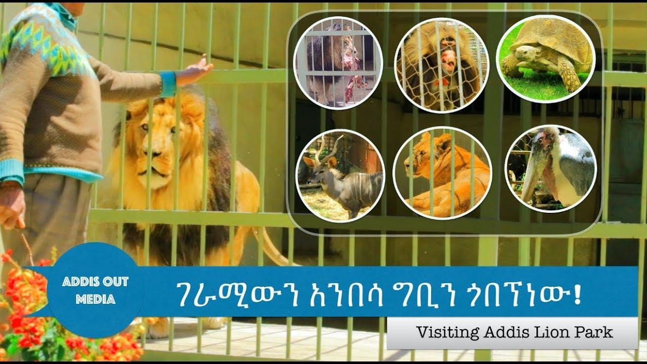 አንበሳ ግቢን ላልጎበኛችው ይህንን ይመስላል |Visiting Addis Ababa onlyLion Park