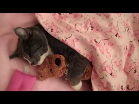 Cute Kitty Cat Loves to Hug His Teddy Bear