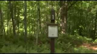 Free Campsite Video Tour - Bingo Brook - Vermont - CarCamping.org