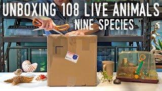 HUGE ANIMAL UNBOXING - 9 Species, 108 Invertebrates!
