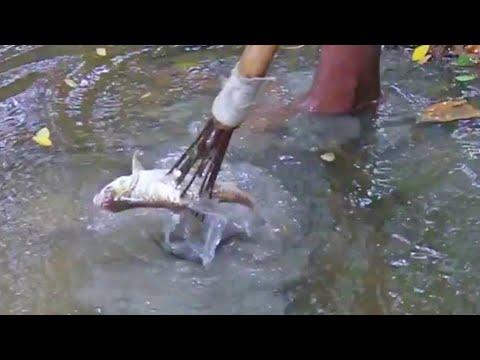 asian traditional fishing | fishing poles | traditional fishing method