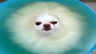 Vídeos engraçados para animais de estimação 2019 ♥ Cães e gatos fofos fazendo coisas engraçadas P5 ♥