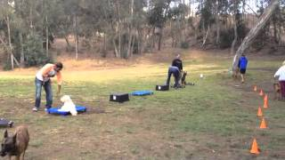 San Diego Group Class Dog Training