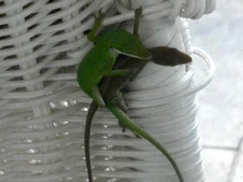 freaky lizards