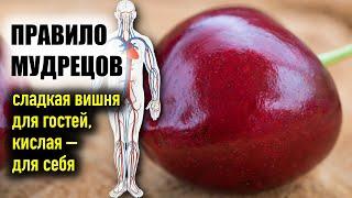 Польза вишни для здоровья: 6 научно доказанных фактов, как вишня спасает тело и освежает мозг