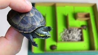 Experiment - Kann eine Baby Schildkröte den Weg aus dem Labyrinth finden?