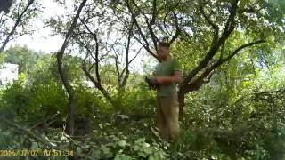 видео Расчистка территории от деревьев альпинистами