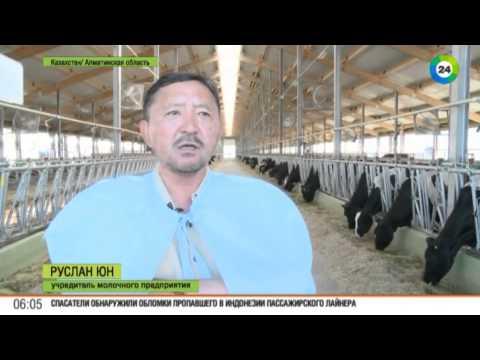Вопрос: Почему сельское хозяйство умирает, а магазины забиты мясом и молоком?