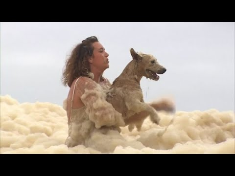 Dramatic video shows a dog being rescued from thick sea foam