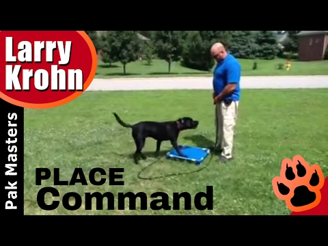 Great dog training exercise to improve any dog's obedience