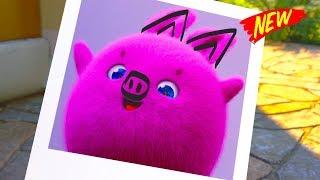 Sunny Bunnies Cartoons | The Bunnies Funniest Picture | SUNNY BUNNIES | Funny Cartoons For Children thumbnail