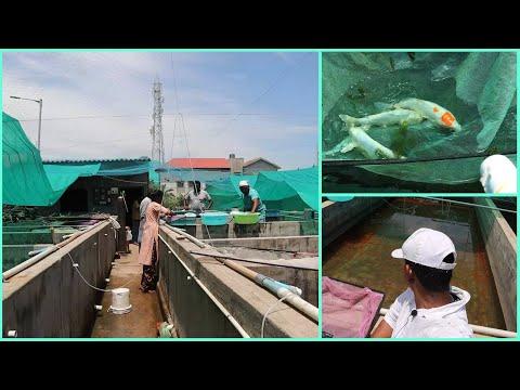 Aquarium Fish Farm - Small  Video At Chennai Kolathur In Tamil -  தமிழ் - Abi Fish Room