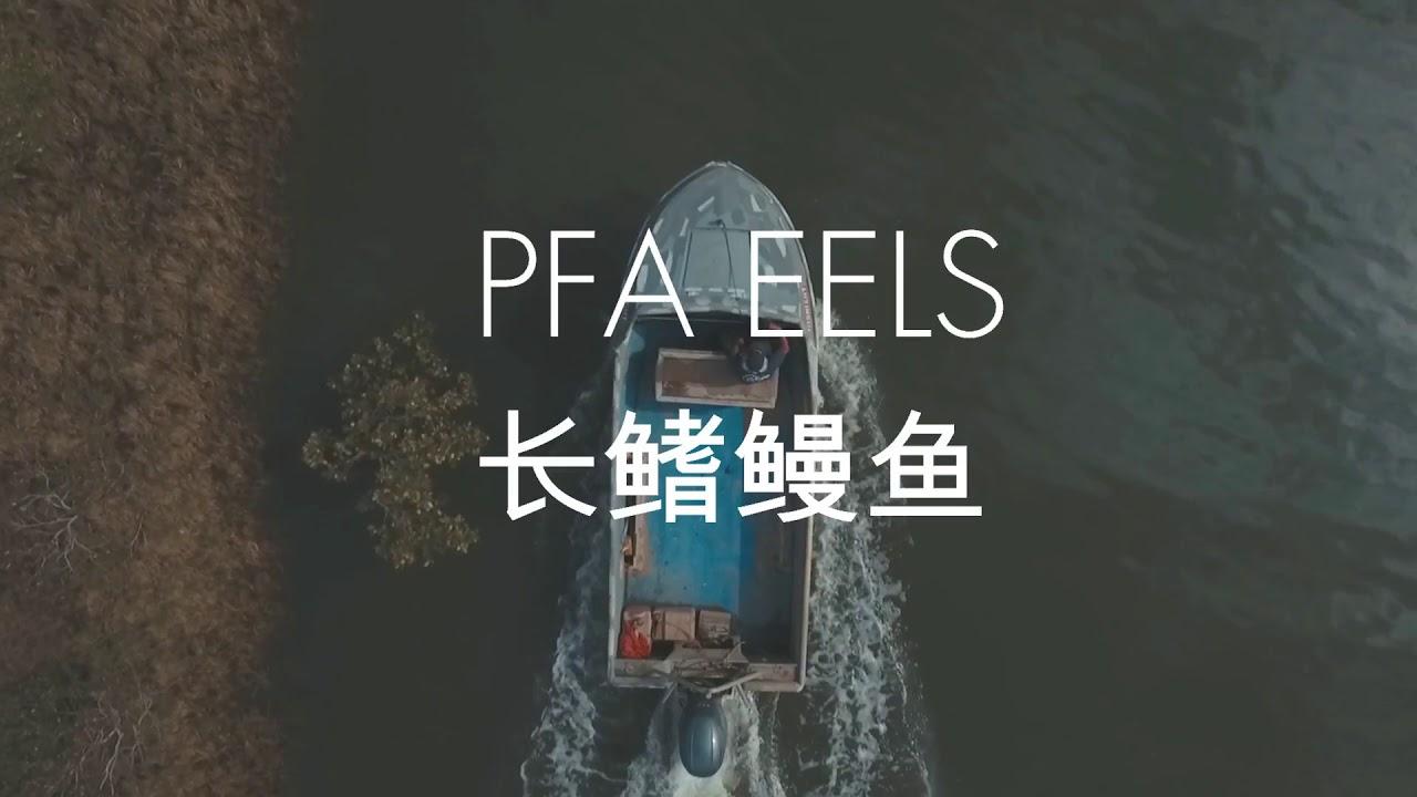 PFA Eels