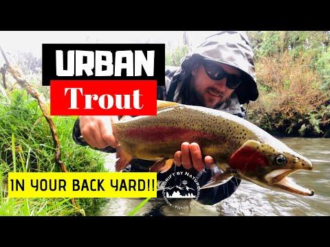 Urban Trout Suburban Fly Fishing