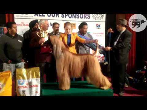 Amritsar Dog Show | Best in Show Awards | 25th Dec 2016 | Dogs99.com