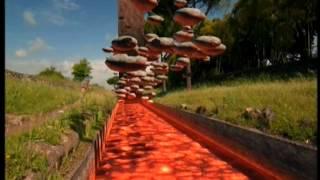 pozzolana e basalto; architettura e strade dell