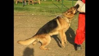 Köpek Eğitimi Kırıkkale 0536 651 81 81