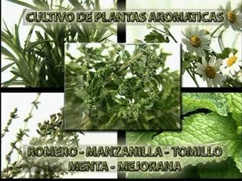 Cultivo de plantas arom ticas youtube for Jardinera plantas aromaticas