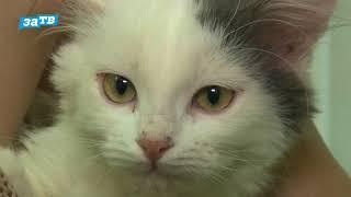 планета ZOO|| Потерялась кошка или собака?