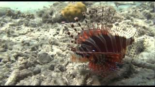 Sensation 1. Teil Schnorchlerfilm von Lembeh Island - Sulawesi