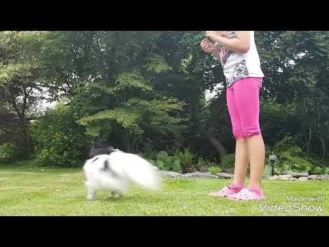 Summer dog tricks by Nexi