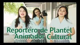 Cobaes Plantel 28 el Tamarindo