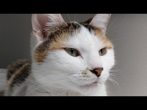 Close-up Angel, Kittens, BBC!