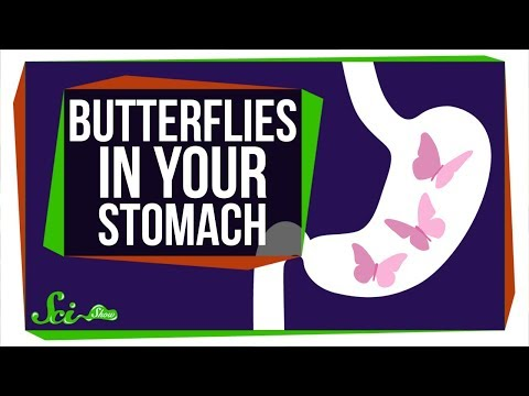 Why Do You Feel Butterflies in Your Stomach? Mp3
