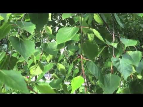 очищение от паразитов травами домашних условиях
