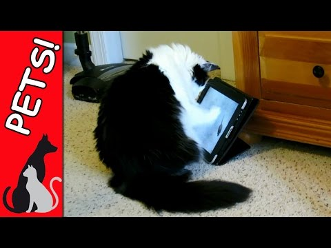 CAT CHASES FAKE MOUSE – FUNNY IPAD TRICK