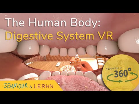 Human Digestive System in VR!!!   Education in 360