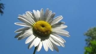 Полевые цветы! Очень красивый ролик из моих фотографий!
