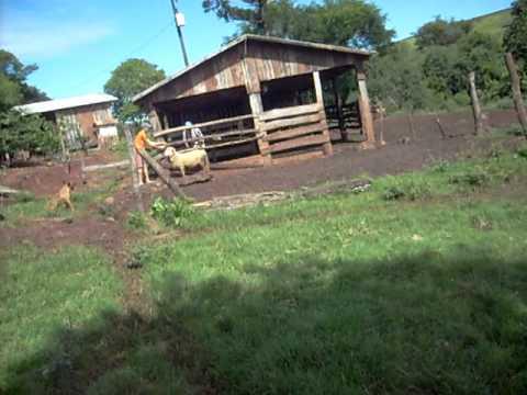 familia cosmann matando carneiro 2