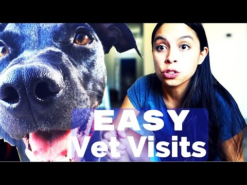 Dog Training: Gentle Mouth & Making Vet Visits Easy