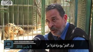 مصر العربية | غزة...