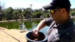 Como pescar Saint Peter