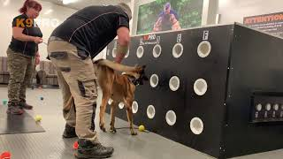 Scent Detection Training