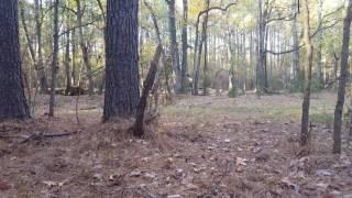 Deer hunting with Remington HTP 357 magnum 180 grain