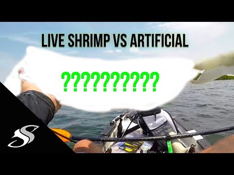 Slaying Fish from the Kayak - Live Shrimp VS Artificial