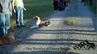 Our Obedience Classes In Tampa Bay
