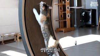3개월만에 캣휠봉인해제(!)