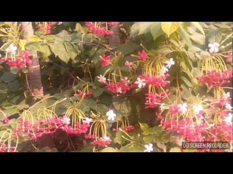 world smallest bird bee humming bird video 2017 new