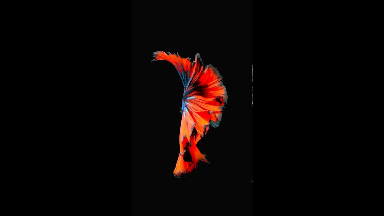 Moving Wallpapers For Iphone 6s Animated Wallpaper N 9 From Iphone 6s And Ios 9 Ispazio