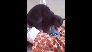 Коту нужна кошка))))