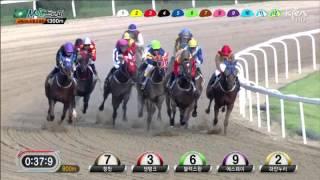 Noel Callow - Seoul Macau Jockey Club Trophy 2013