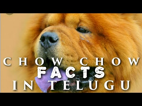Chow chow dog facts ll in Telugu