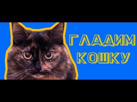 Вопрос: Как погладить кошку, чтобы она громко замурчала?